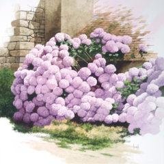 11.-Lhortensias-50x50